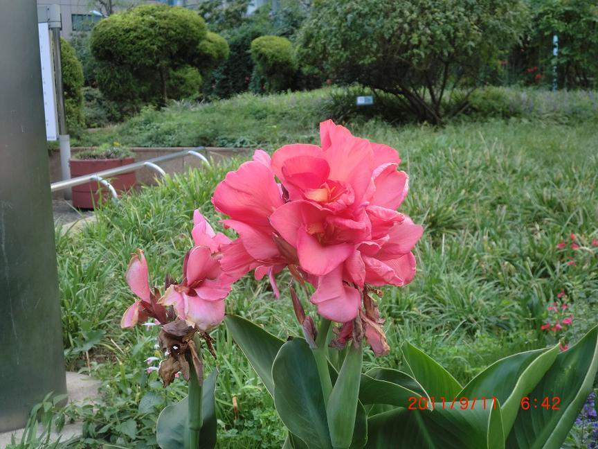 http://www.law-pro.jp/weblog/20110913%E2%91%A1.JPG