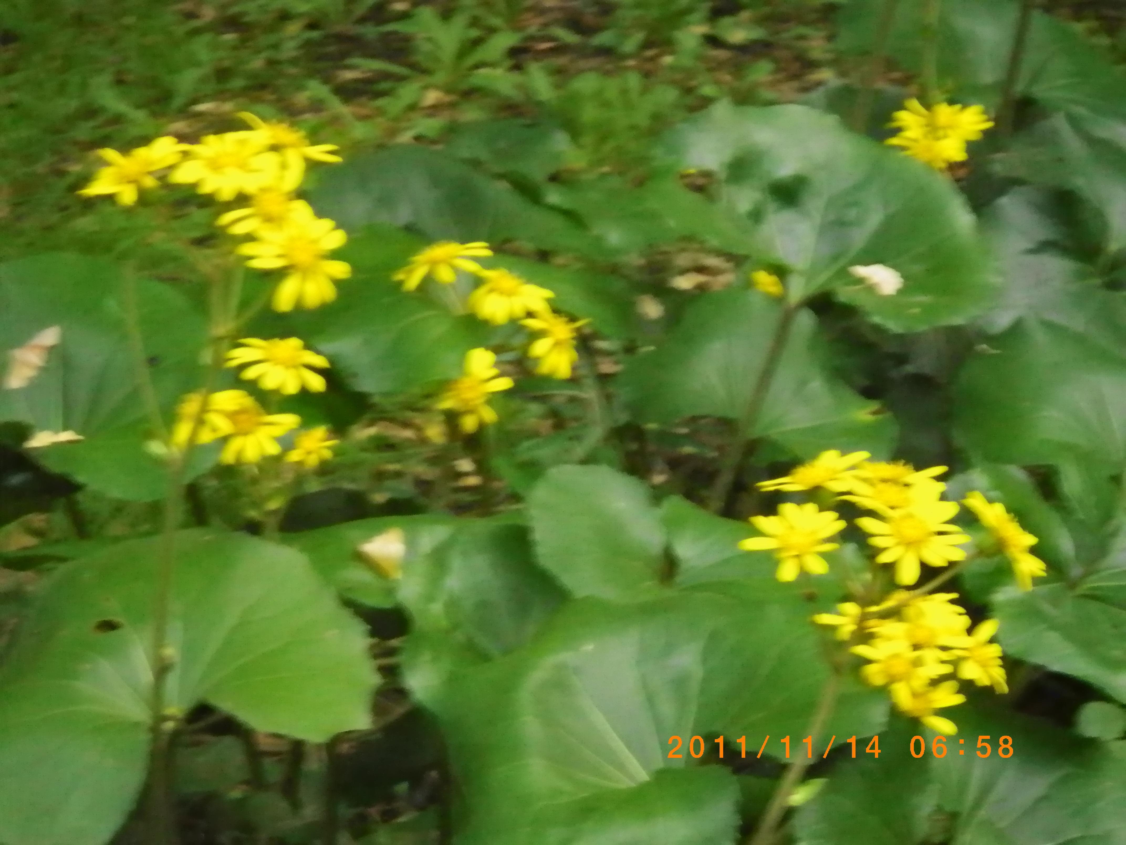 http://www.law-pro.jp/weblog/20111114.JPG
