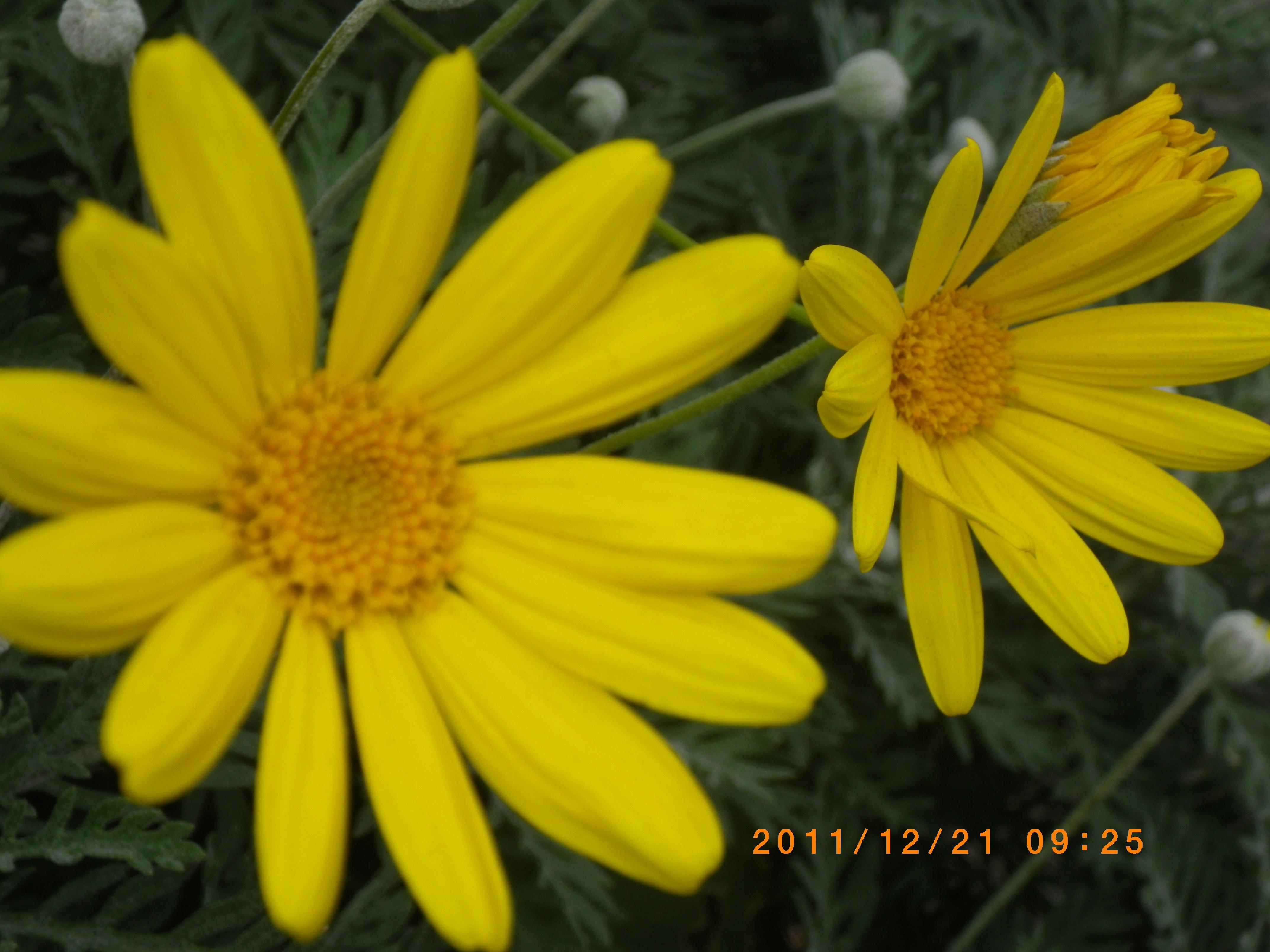 http://www.law-pro.jp/weblog/20111222.JPG