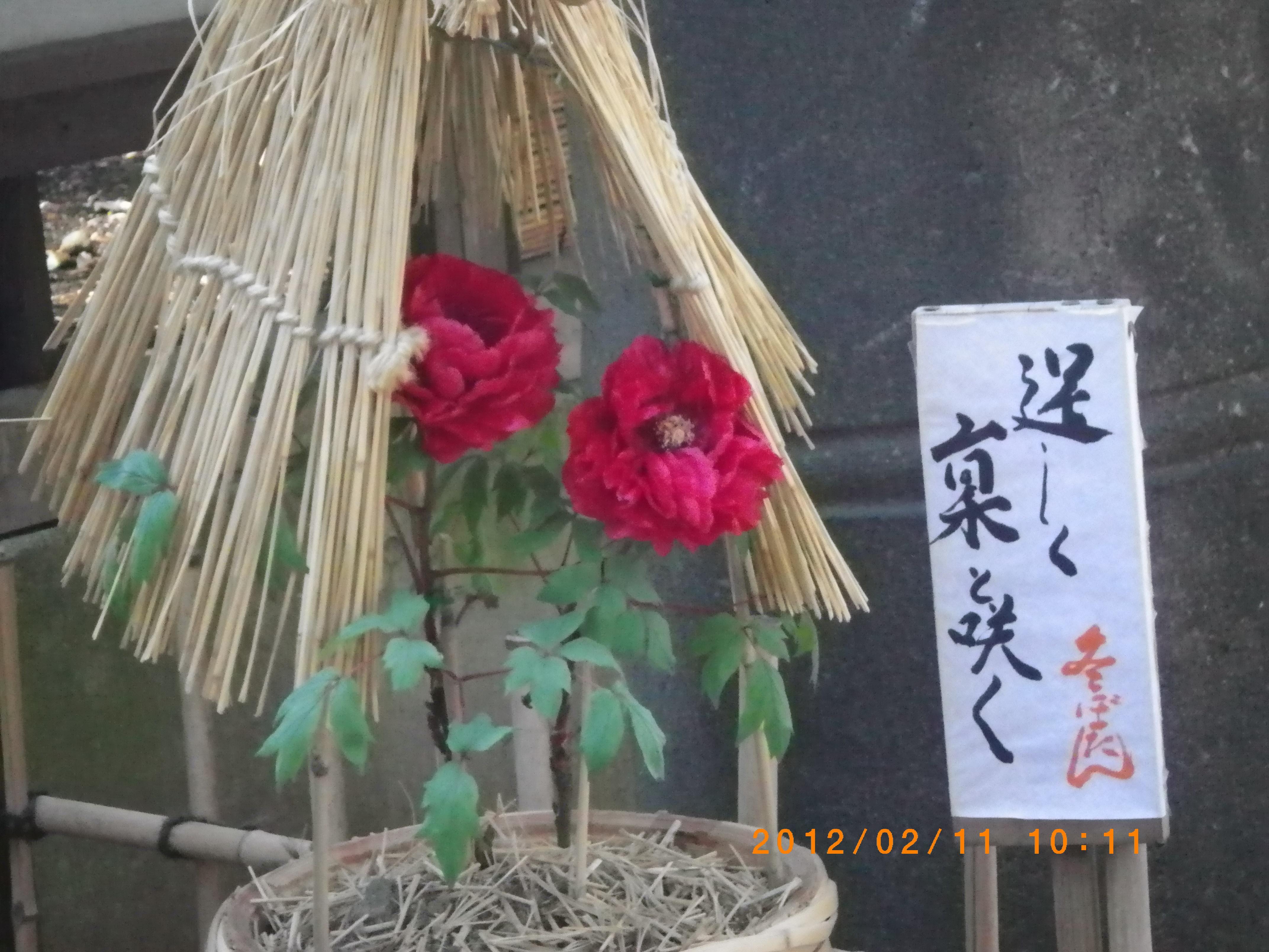 http://www.law-pro.jp/weblog/20120224.JPG