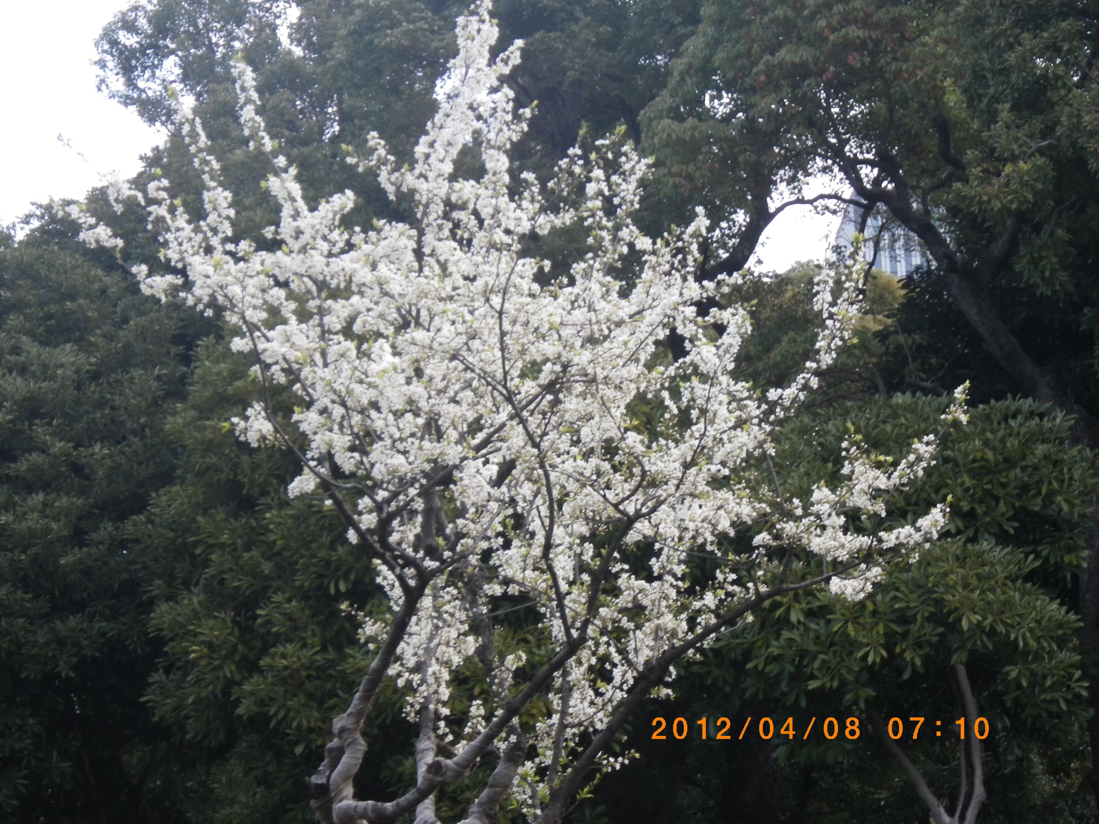 http://www.law-pro.jp/weblog/20120413.JPG