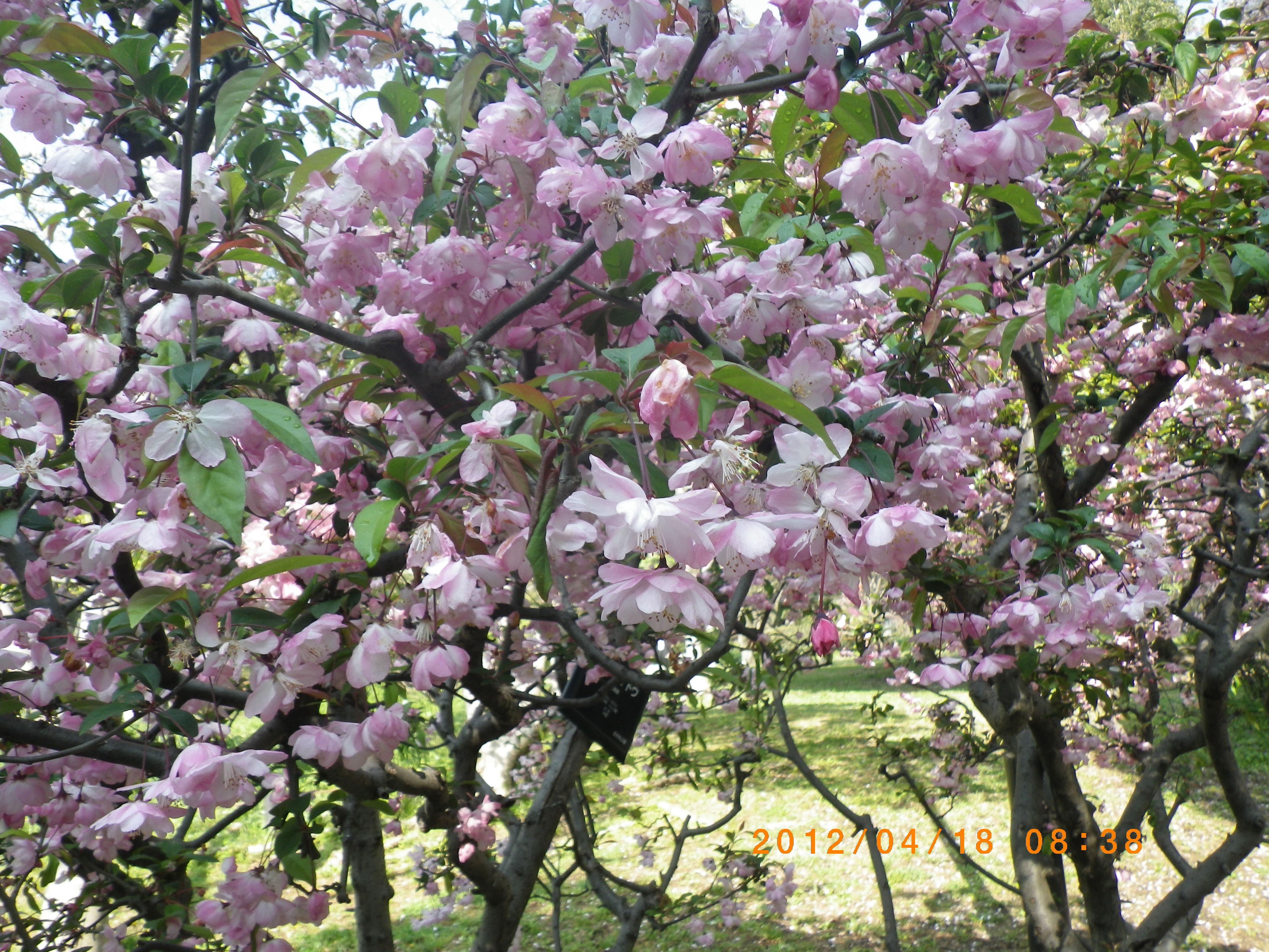 http://www.law-pro.jp/weblog/20120420.JPG