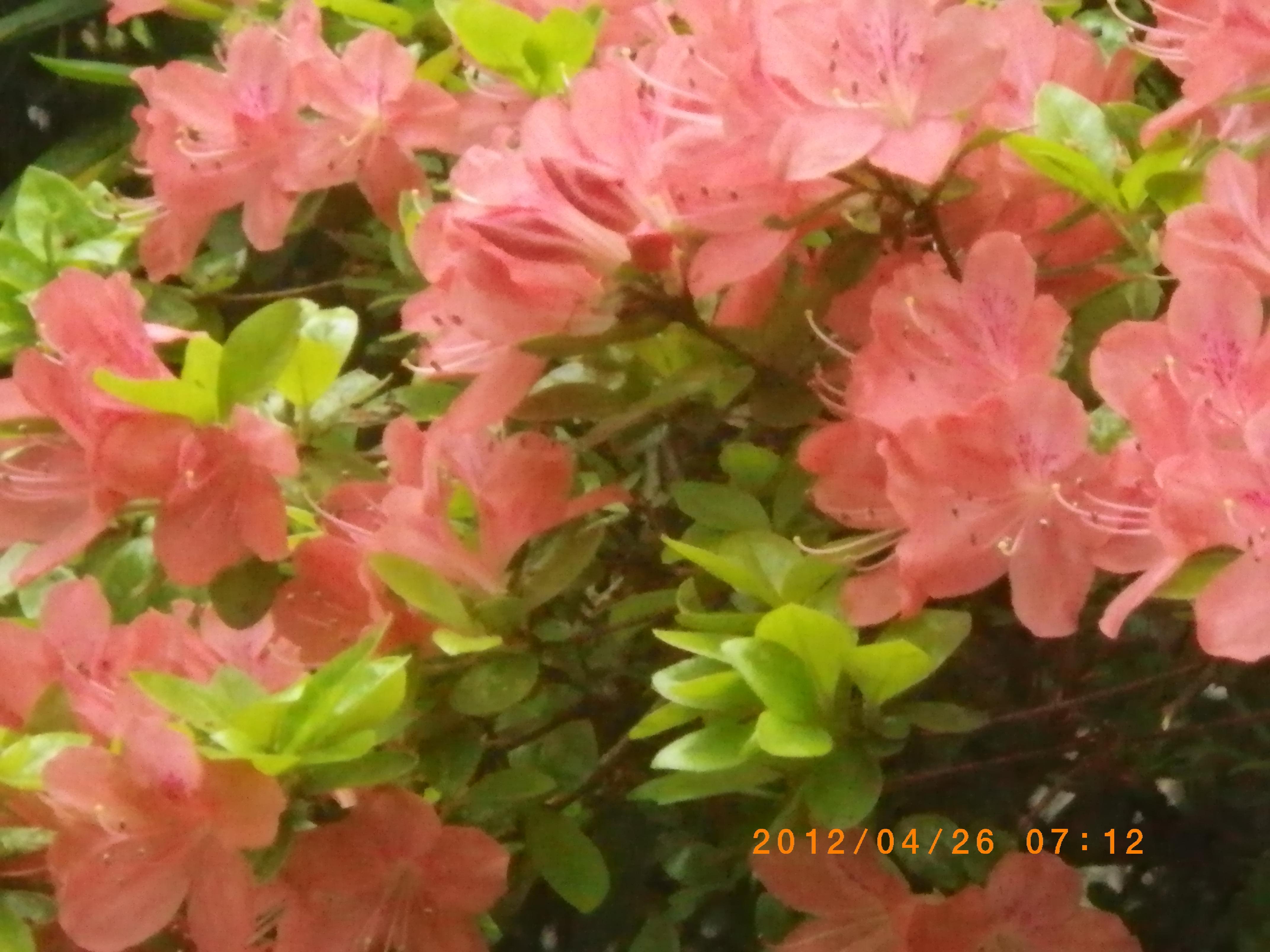 http://www.law-pro.jp/weblog/20120427.JPG