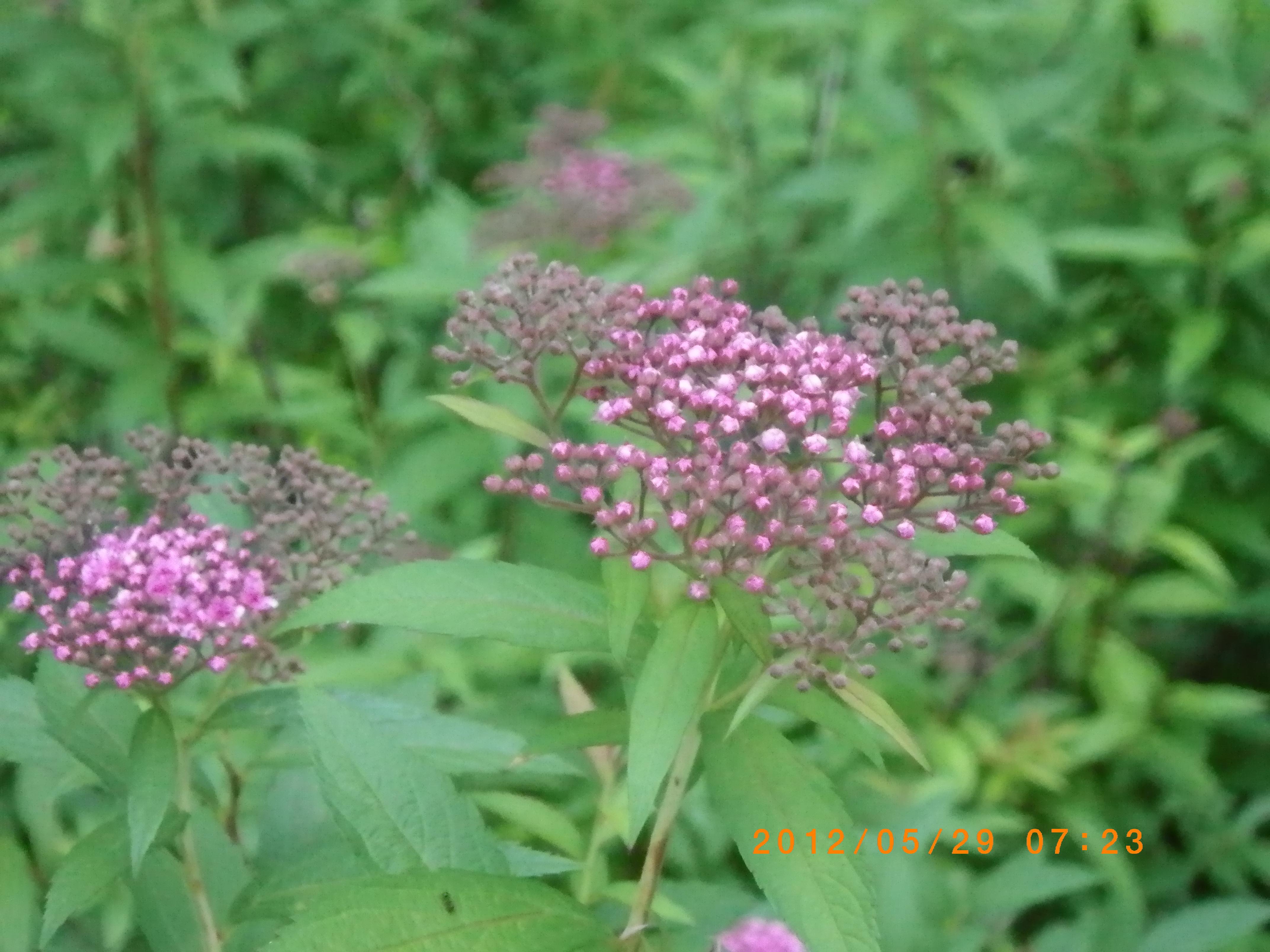 http://www.law-pro.jp/weblog/20120601.JPG