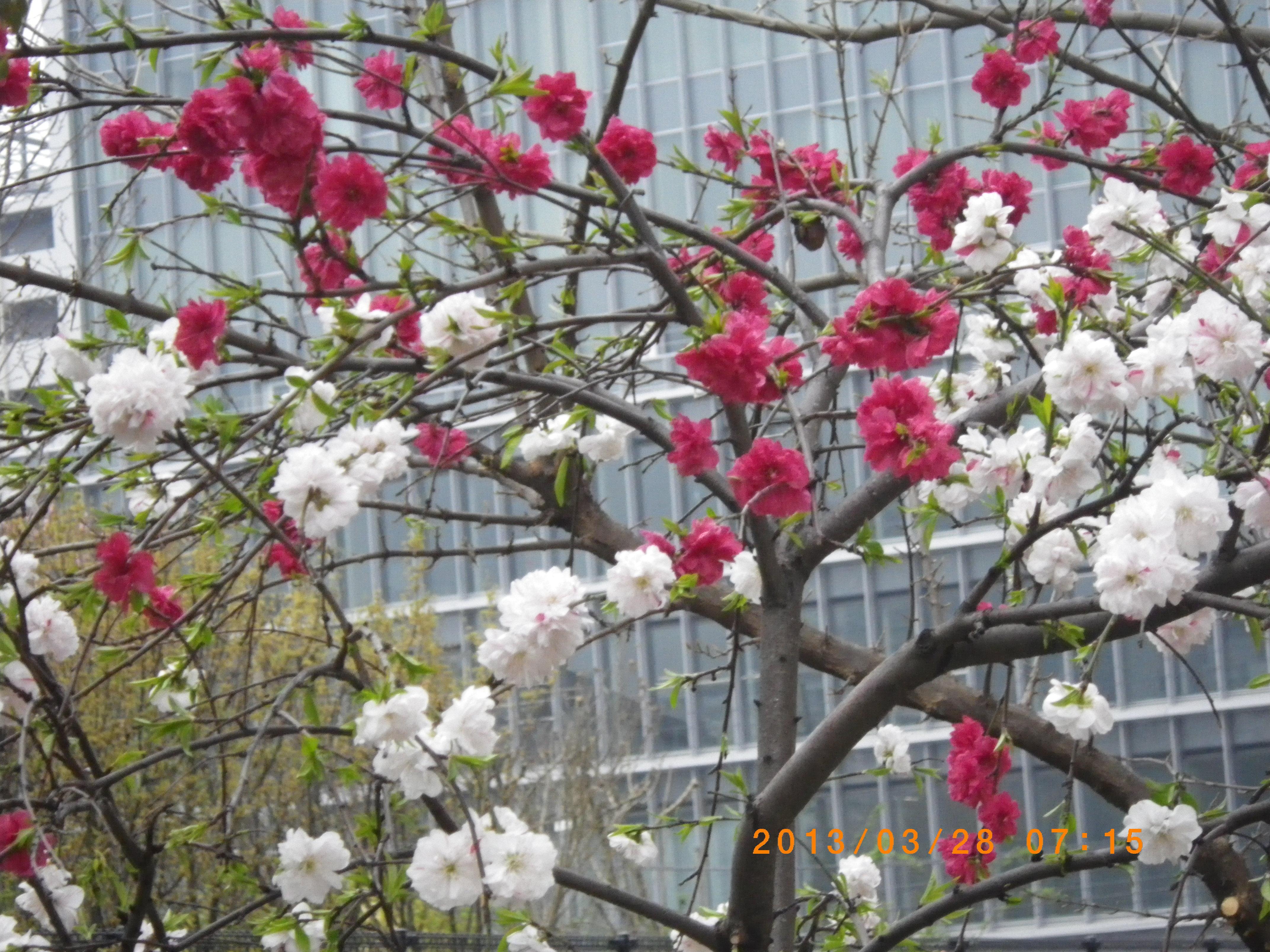 http://www.law-pro.jp/weblog/20130329/IMGP3634.JPG