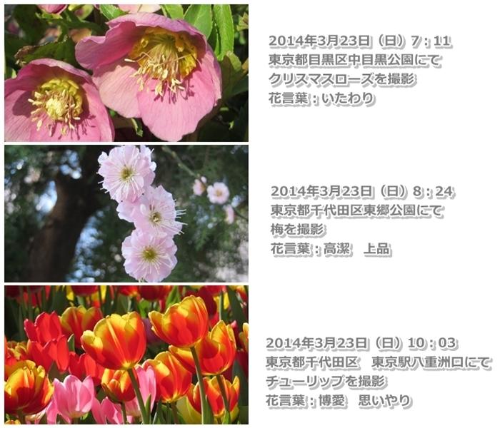 http://www.law-pro.jp/weblog/20140404.jpg