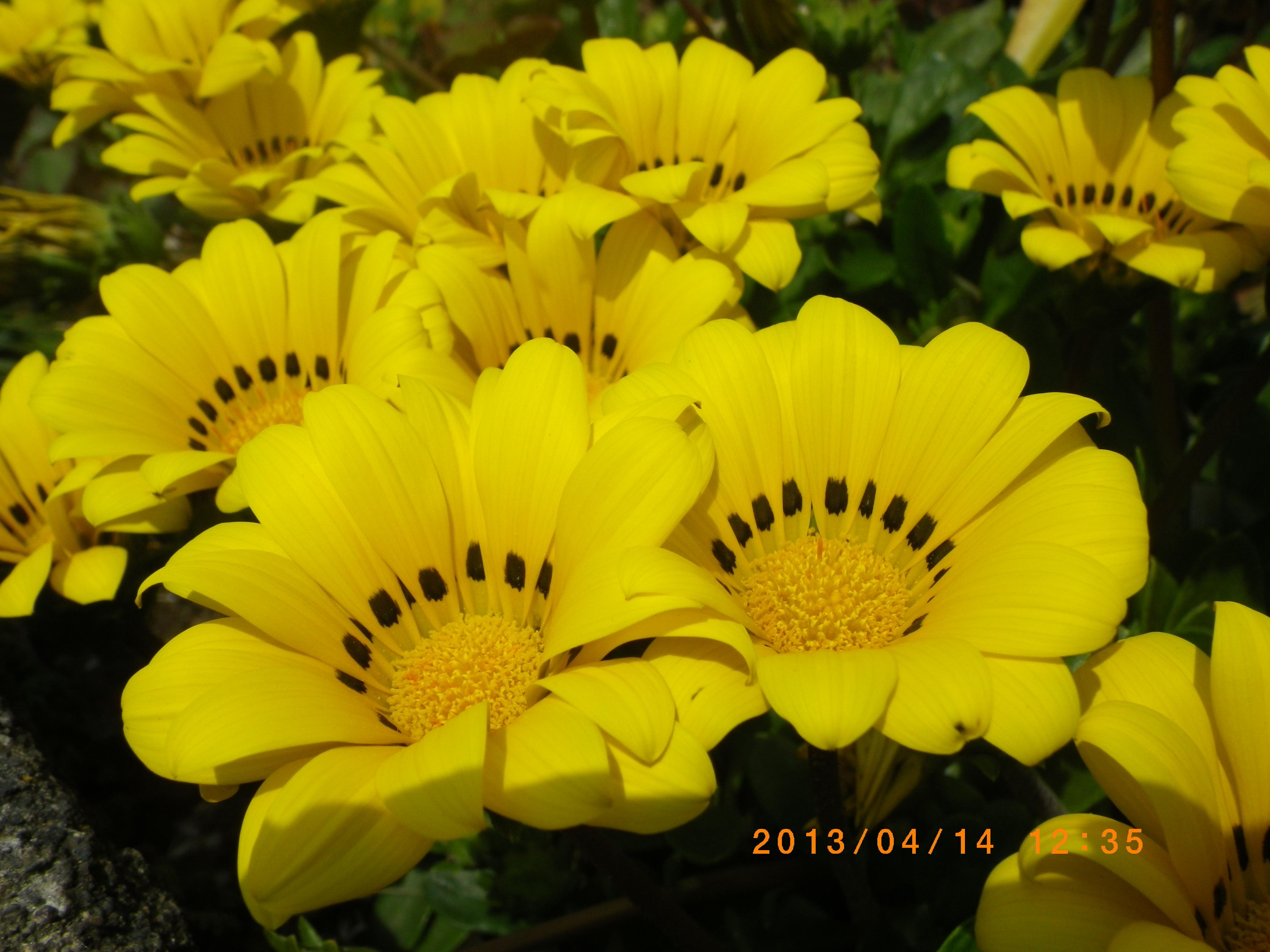 http://www.law-pro.jp/weblog/IMGP0105.JPG