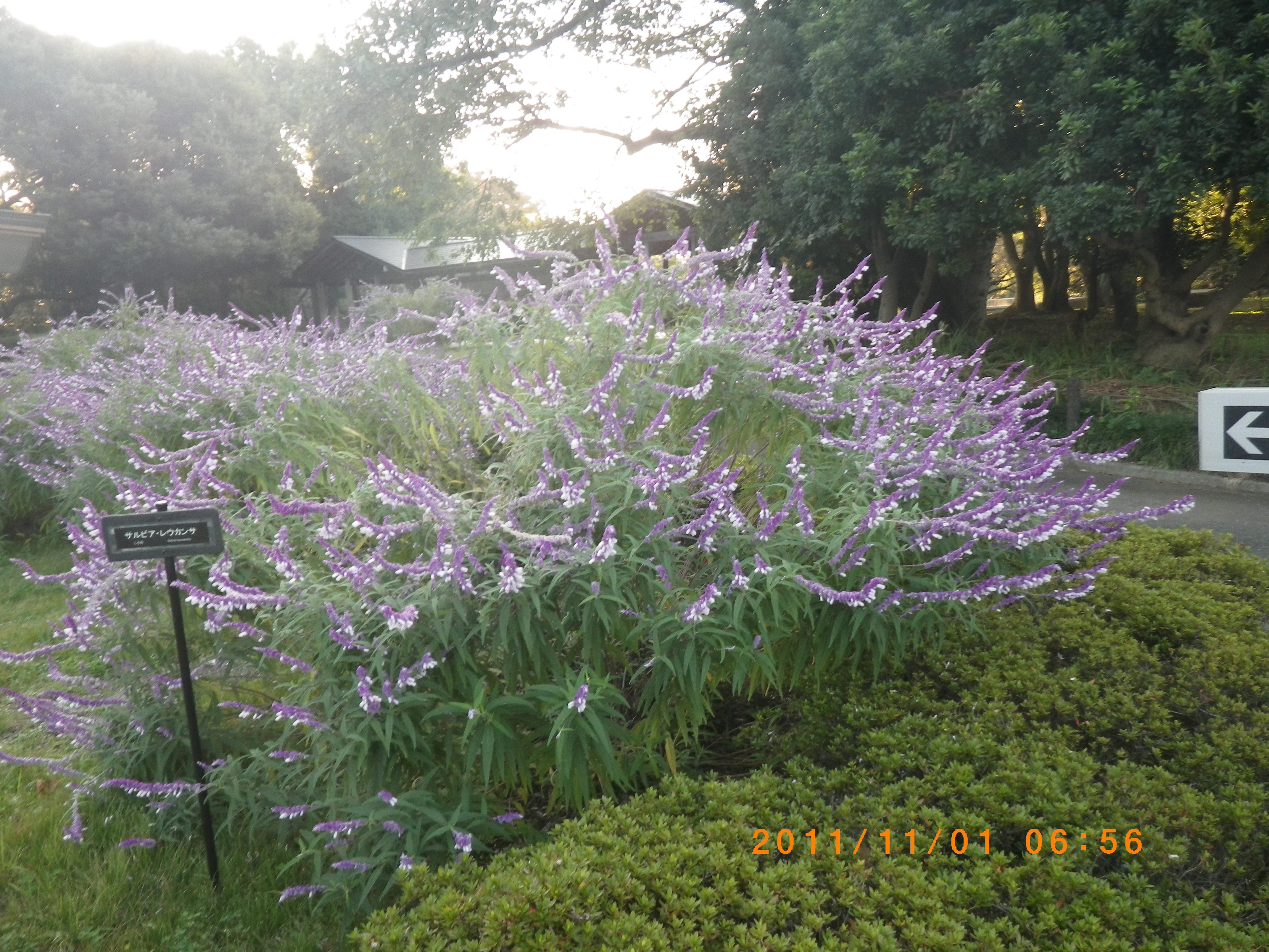 http://www.law-pro.jp/weblog/IMGP0124.JPG
