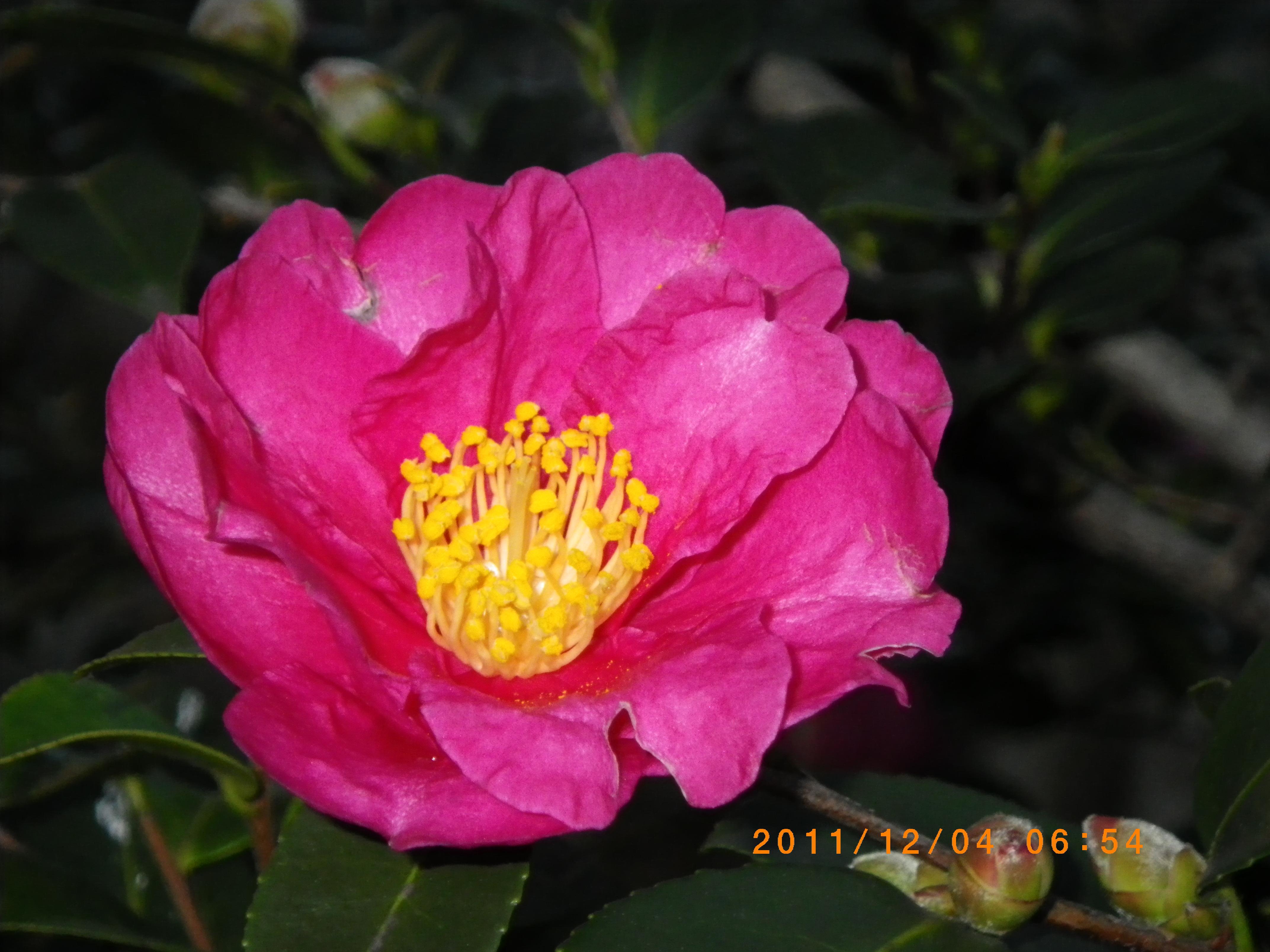 http://www.law-pro.jp/weblog/IMGP0544.JPG