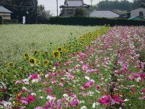 風戸農園.jpg