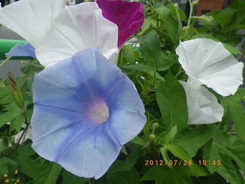 http://www.law-pro.jp/weblog/assets_c/2012/08/IMGP2158-thumb-500x375-619.jpg