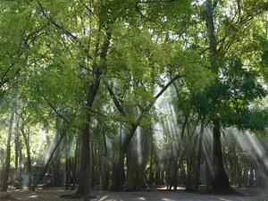 カオハガン島の森